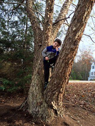 Mason tree